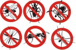 Pest Kontrol Hizmetleri